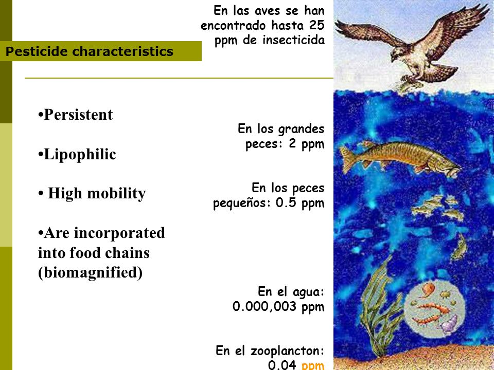Persistent Lipophilic High mobility Are incorporated into food chains (biomagnified) Pesticide characteristics En las aves se han encontrado hasta 25 ppm de insecticida En los grandes peces: 2 ppm En los peces pequeños: 0.5 ppm En el agua: 0.000,003 ppm En el zooplancton: 0.04 ppm