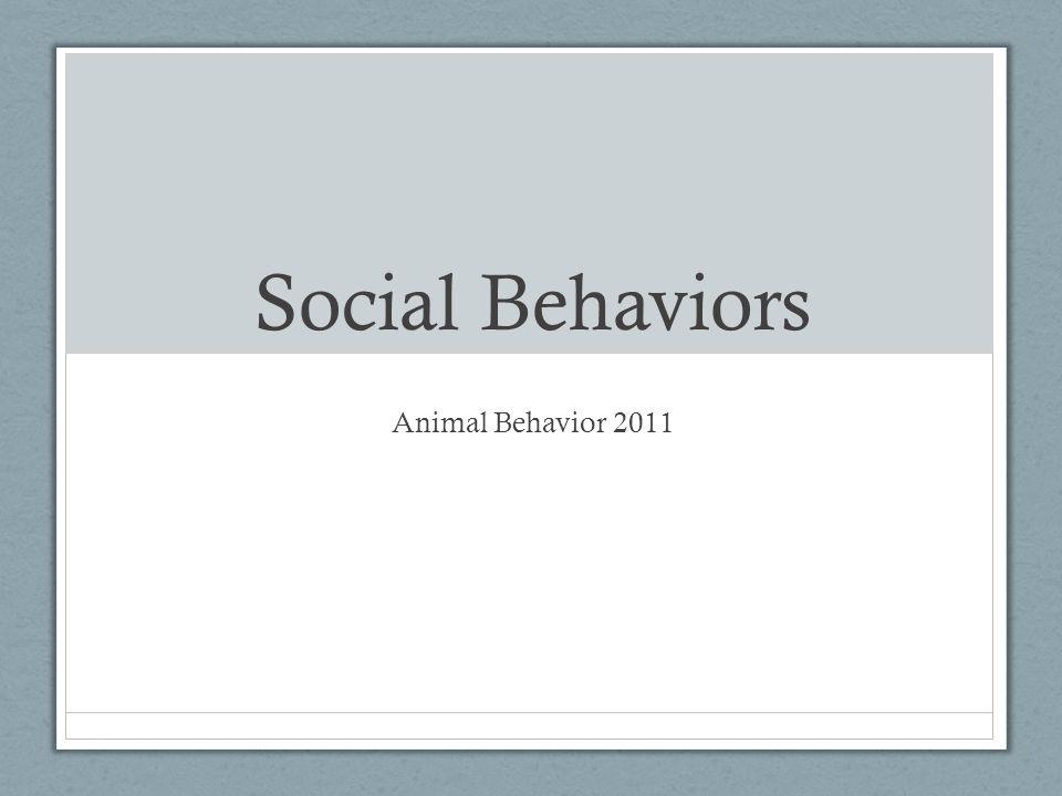 Social Behaviors Animal Behavior 2011
