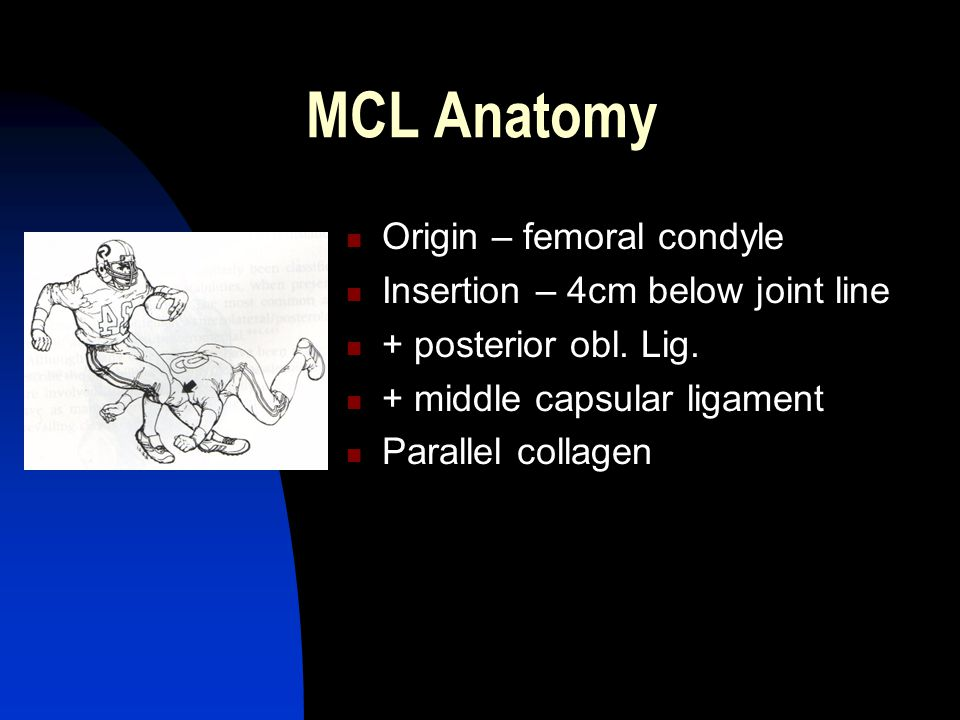 MCL Anatomy Origin – femoral condyle Insertion – 4cm below joint line + posterior obl.