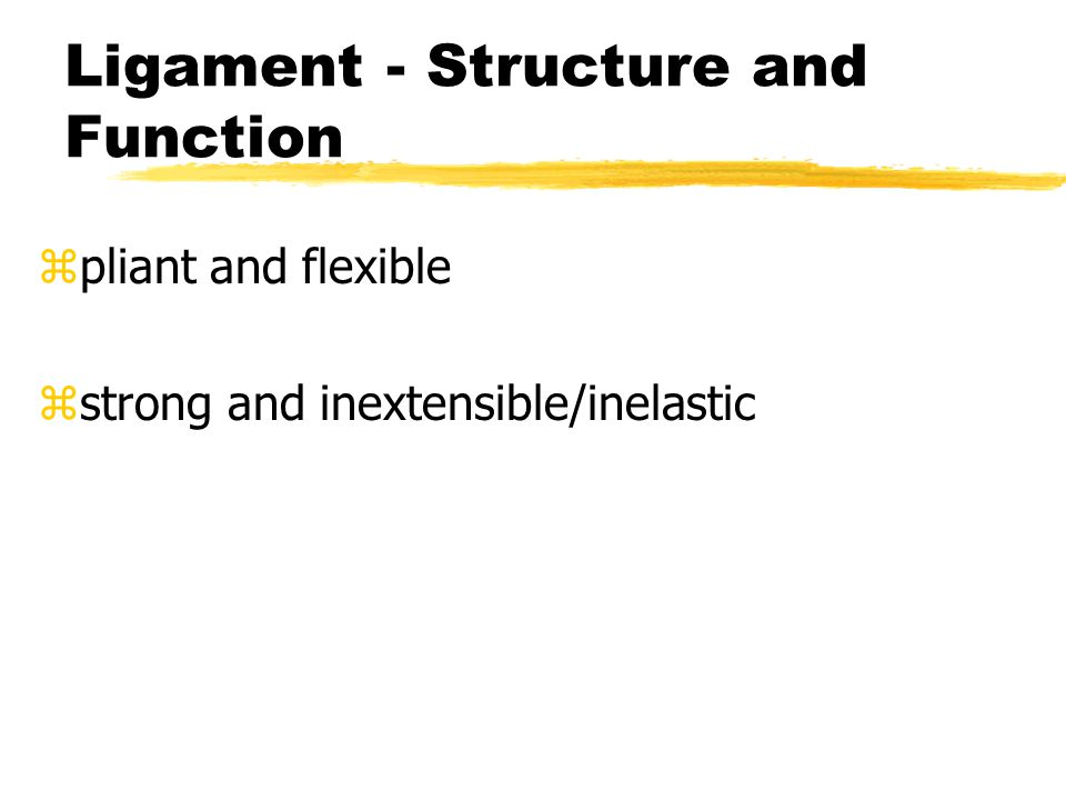Ligament - Structure and Function z pliant and flexible z strong and inextensible/inelastic