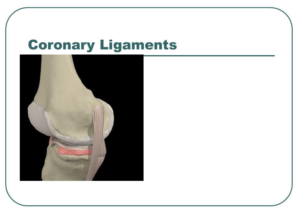 Coronary Ligaments
