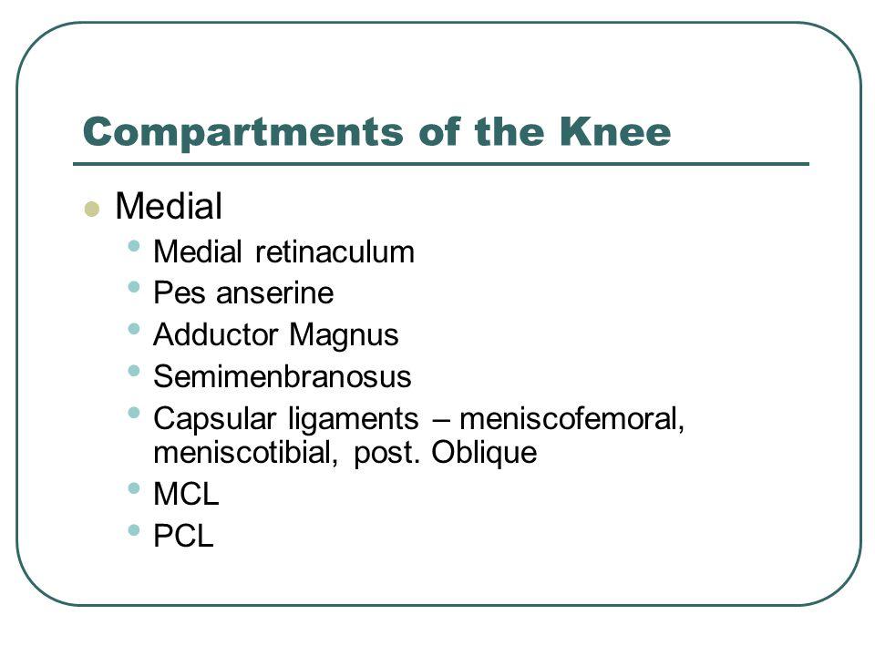 Compartments of the Knee Medial Medial retinaculum Pes anserine Adductor Magnus Semimenbranosus Capsular ligaments – meniscofemoral, meniscotibial, post.