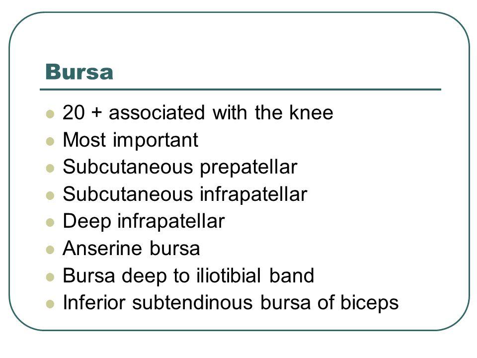 Bursa 20 + associated with the knee Most important Subcutaneous prepatellar Subcutaneous infrapatellar Deep infrapatellar Anserine bursa Bursa deep to iliotibial band Inferior subtendinous bursa of biceps