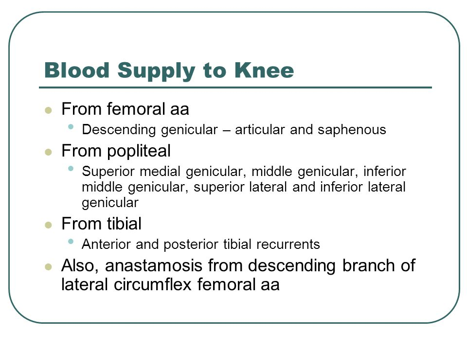 Blood Supply to Knee From femoral aa Descending genicular – articular and saphenous From popliteal Superior medial genicular, middle genicular, inferior middle genicular, superior lateral and inferior lateral genicular From tibial Anterior and posterior tibial recurrents Also, anastamosis from descending branch of lateral circumflex femoral aa