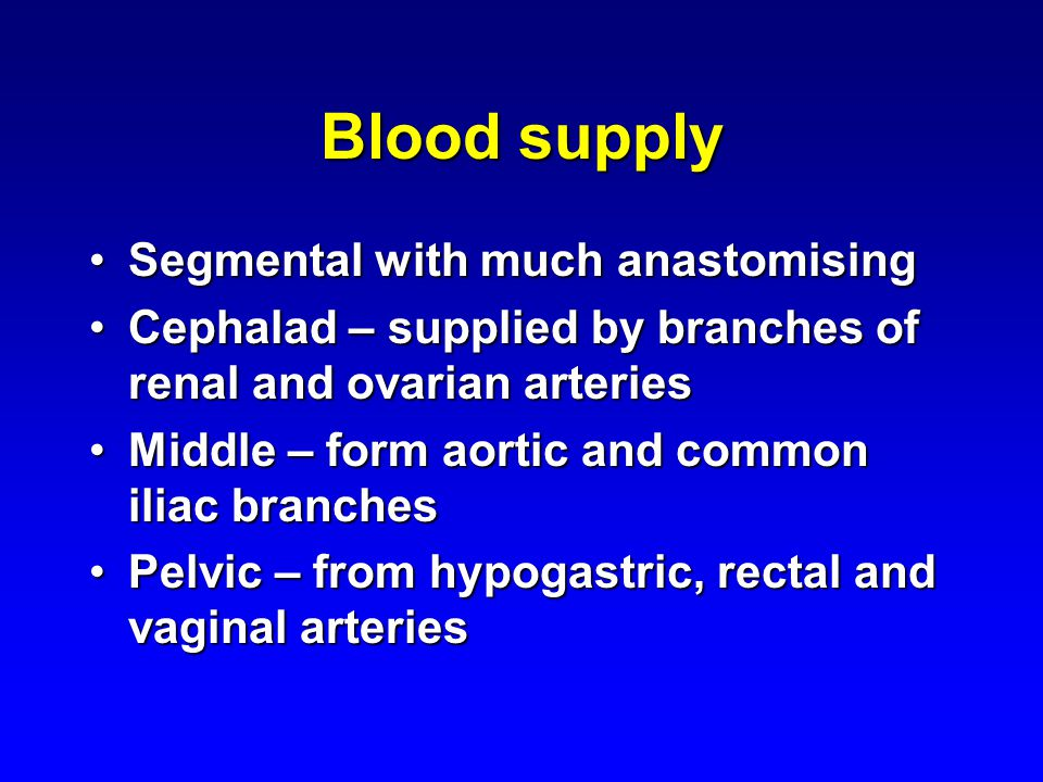 Blood supply Segmental with much anastomisingSegmental with much anastomising Cephalad – supplied by branches of renal and ovarian arteriesCephalad –
