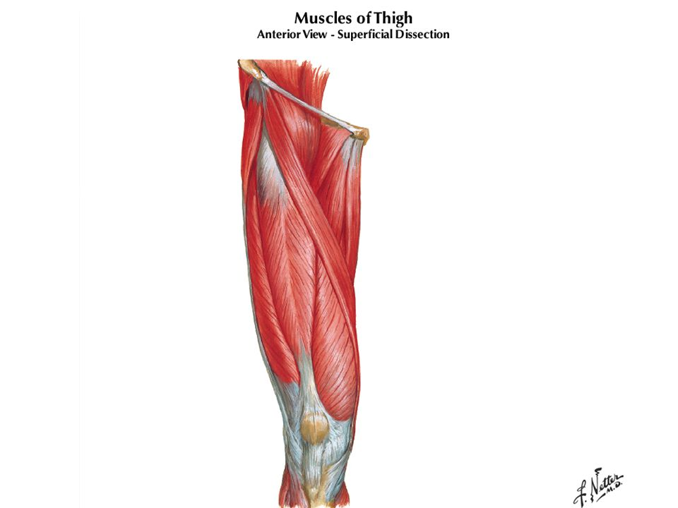 MEDmetric® Knee Ligament ARTHROMETER® Model KT1000™