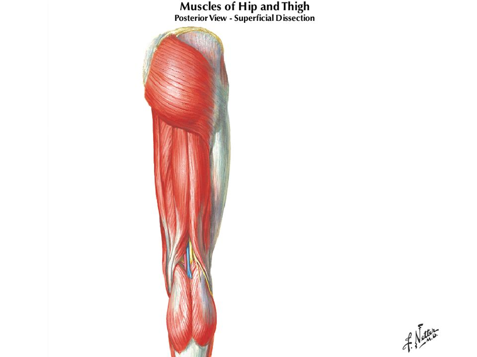 Allografts Advantages –Technically easy Biological Considerations –Greater than one year for revascularization –Rejection –Infectious transmission Technically easy Economic considerations –Very expensive Success Rate 80% stable knees Return to sports not before one year Indications –Non-athletic patients over 40