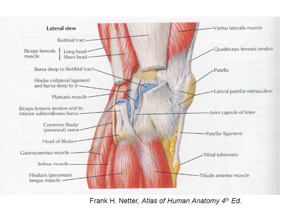 http://www.emedx.com/emedx/diagnosis_information/diagnosis_information_image _files/knee_images/acl_mri_torn.JPG