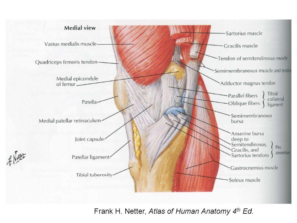 http://www.rad.washington.edu/staticpix/anatomy/ACL1.jpg