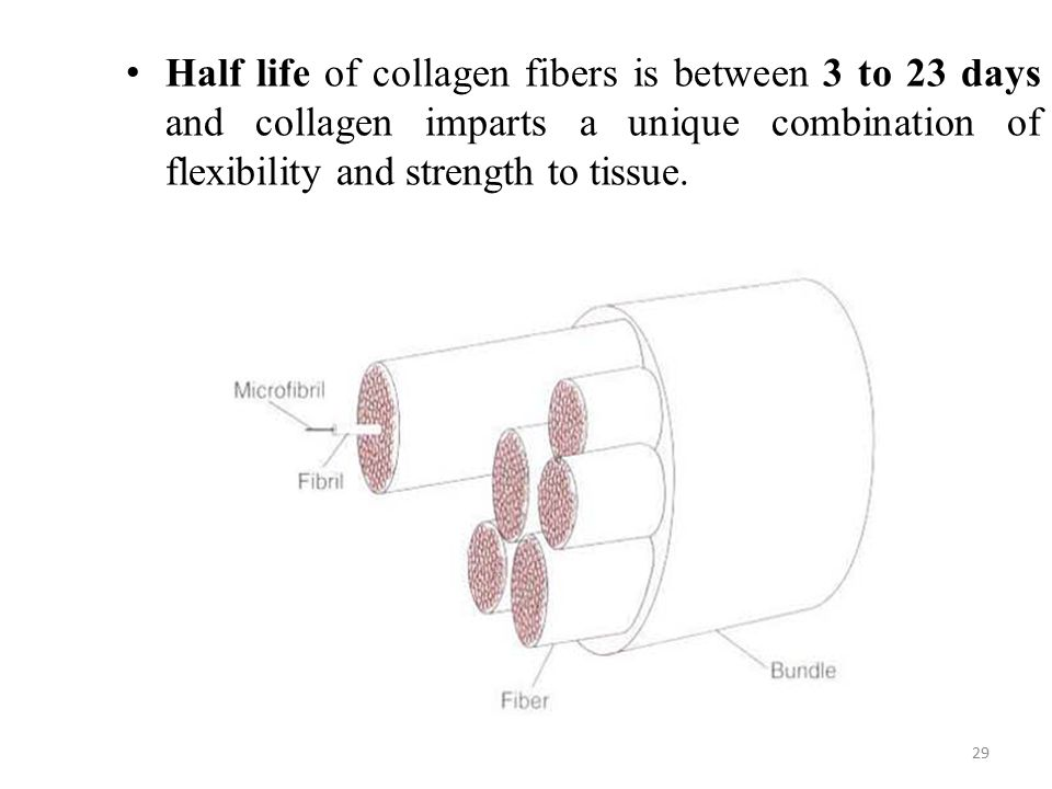 Half life of collagen fibers is between 3 to 23 days and collagen imparts a unique combination of flexibility and strength to tissue.