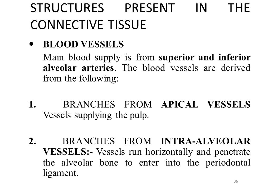 STRUCTURES PRESENT IN THE CONNECTIVE TISSUE BLOOD VESSELS BLOOD VESSELS Main blood supply is from superior and inferior alveolar arteries.