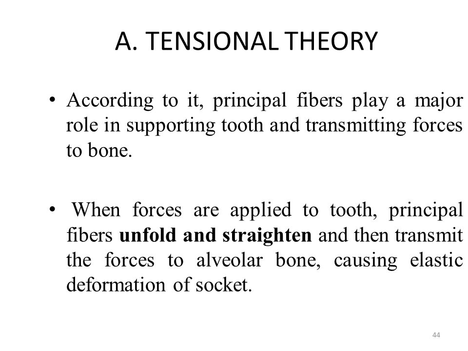 A. TENSIONAL THEORY According to it, principal fibers play a major role in supporting tooth and transmitting forces to bone. According to it, principa