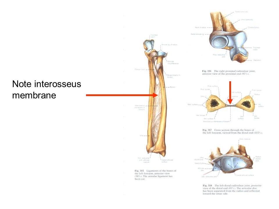 Note interosseus membrane
