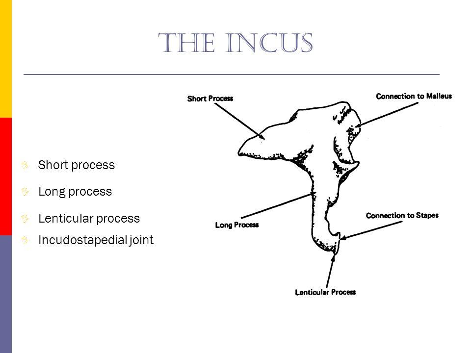 The incus