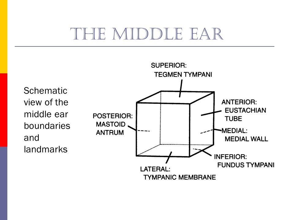 The superior face u Tegmen Tympani