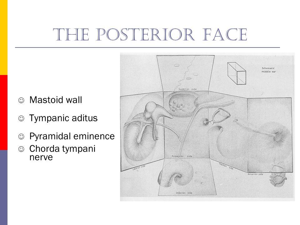The anterior face Carotid wall Eustachian tube