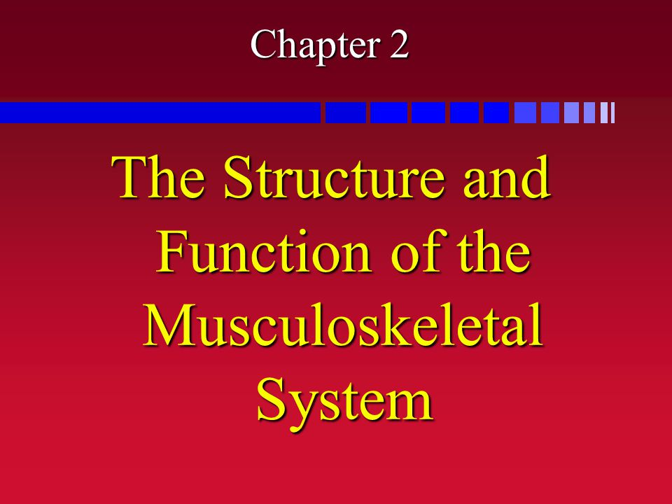 Chapter 2 The Structure and Function of the Musculoskeletal System