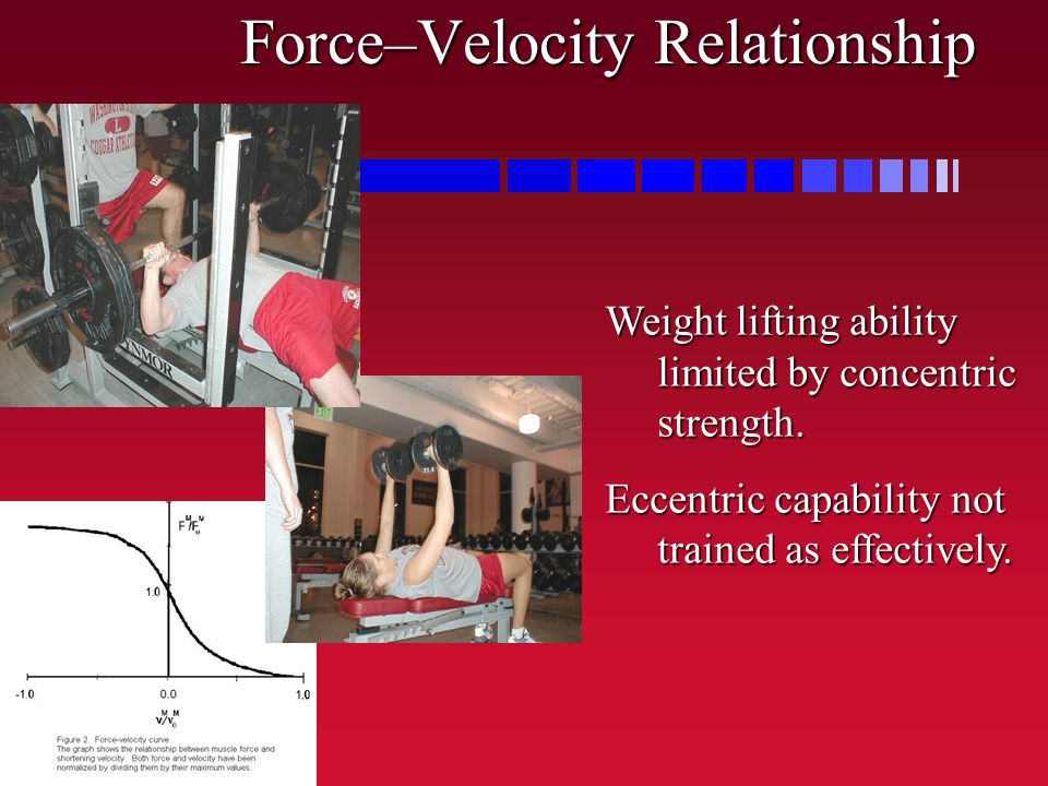 Force–Velocity Relationship Weight lifting ability limited by concentric strength. Eccentric capability not trained as effectively.