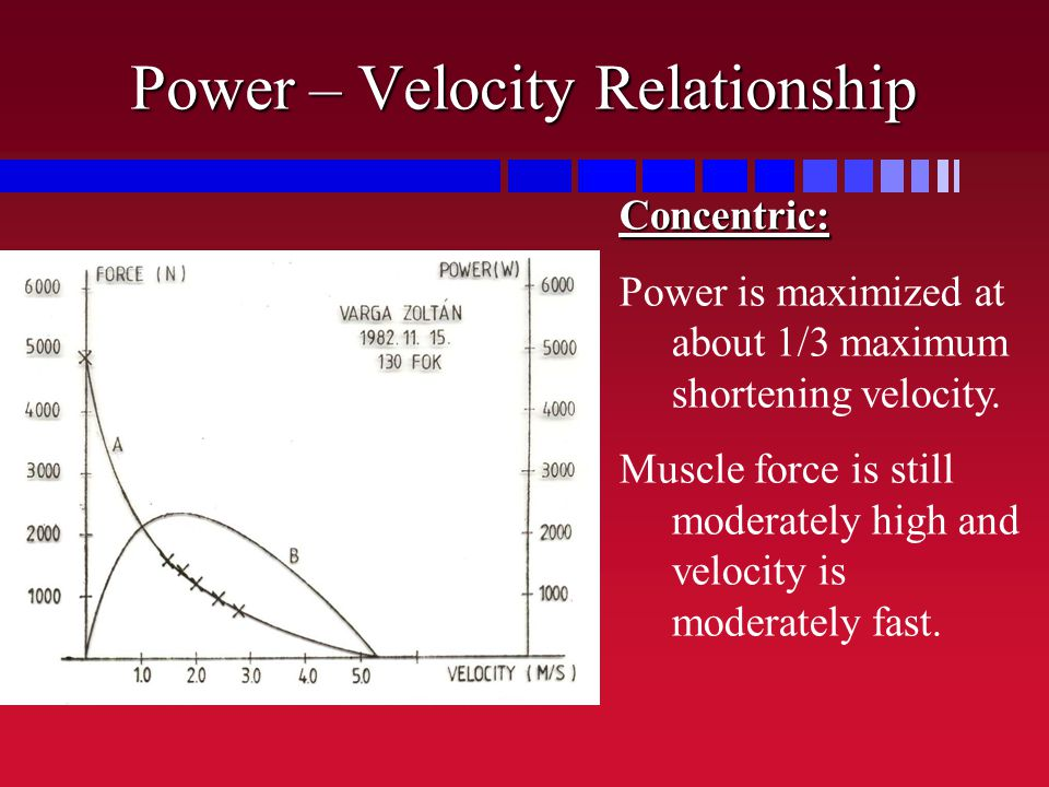 Power – Velocity Relationship Concentric: Power is maximized at about 1/3 maximum shortening velocity. Muscle force is still moderately high and veloc