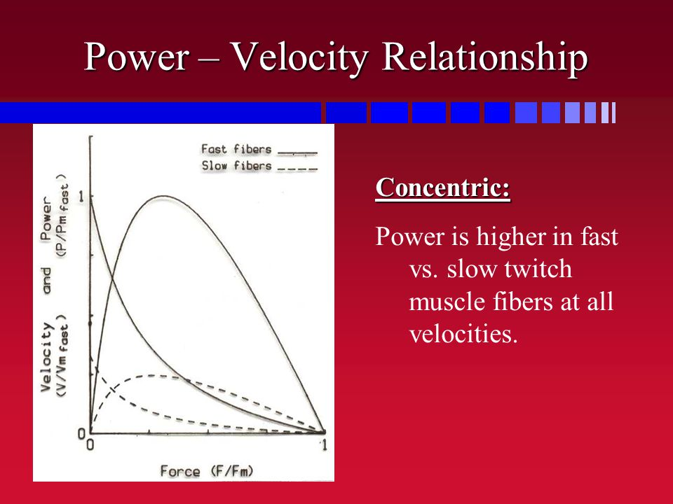 Power – Velocity Relationship Concentric: Power is higher in fast vs. slow twitch muscle fibers at all velocities.