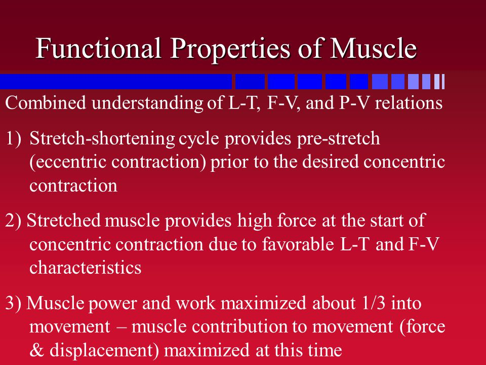 Functional Properties of Muscle Combined understanding of L-T, F-V, and P-V relations 1)Stretch-shortening cycle provides pre-stretch (eccentric contr