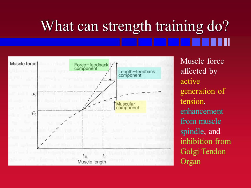 What can strength training do? Muscle force affected by active generation of tension, enhancement from muscle spindle, and inhibition from Golgi Tendo
