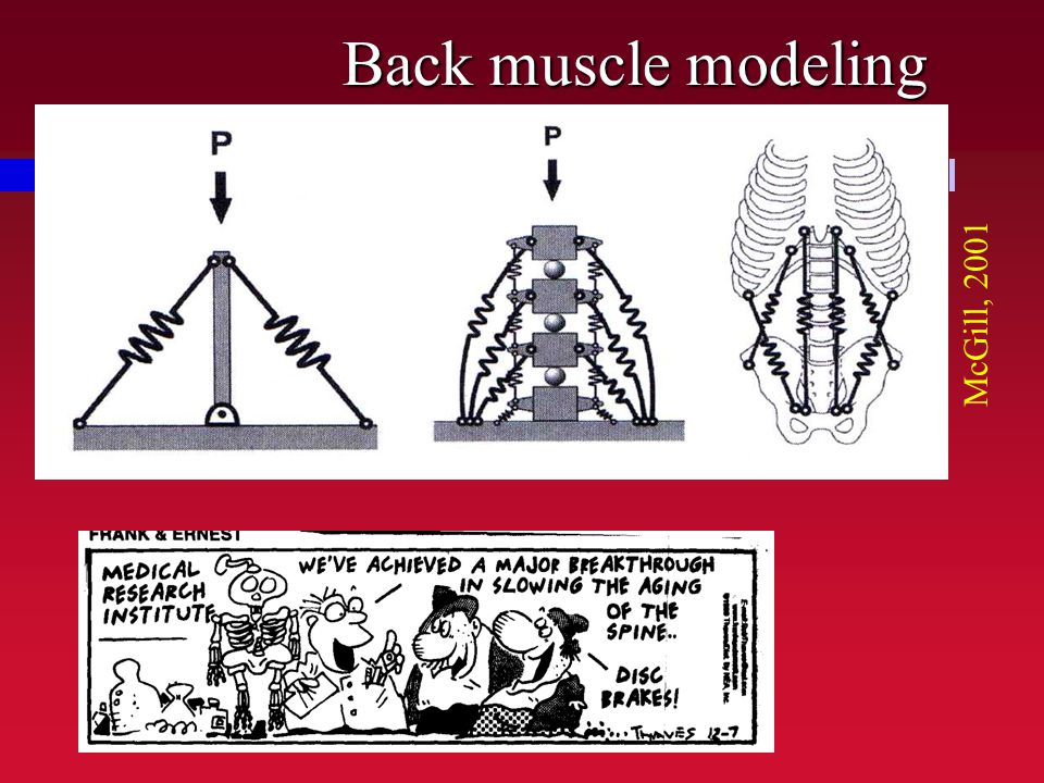Back muscle modeling McGill, 2001