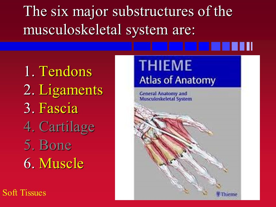 The six major substructures of the musculoskeletal system are: 1. Tendons 2. Ligaments 3. Fascia 4. Cartilage 5. Bone 6. Muscle Soft Tissues