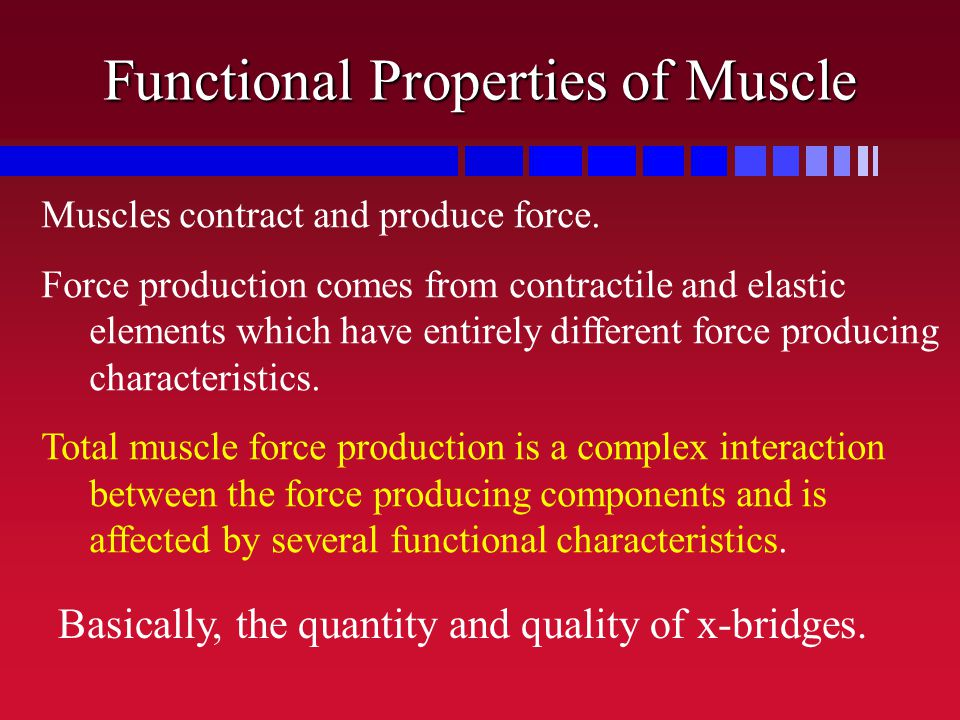 Functional Properties of Muscle Muscles contract and produce force. Force production comes from contractile and elastic elements which have entirely d