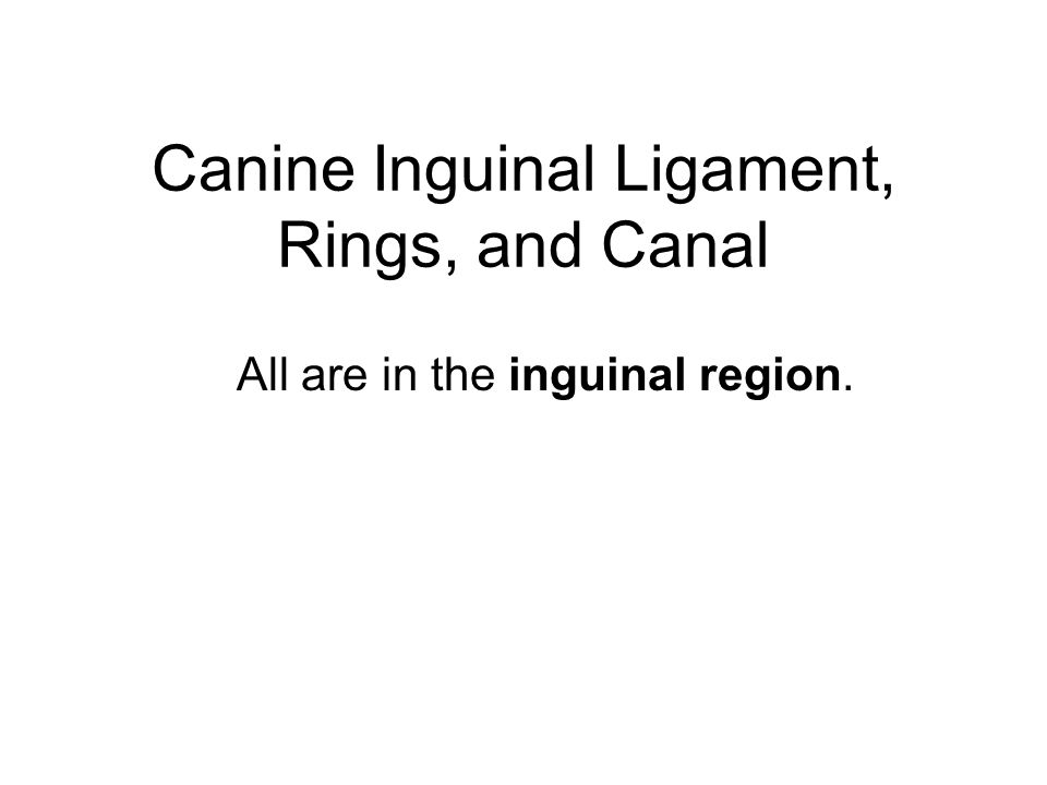 WHERE IS THE INGUINAL REGION.