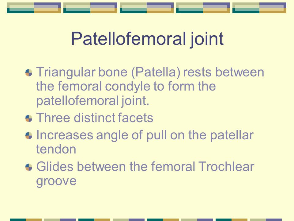 Patellofemoral joint Triangular bone (Patella) rests between the femoral condyle to form the patellofemoral joint. Three distinct facets Increases ang
