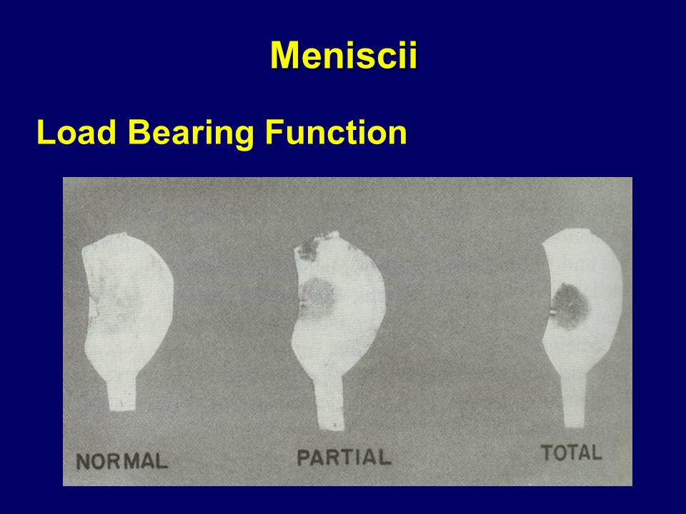 Meniscii Load Bearing Function