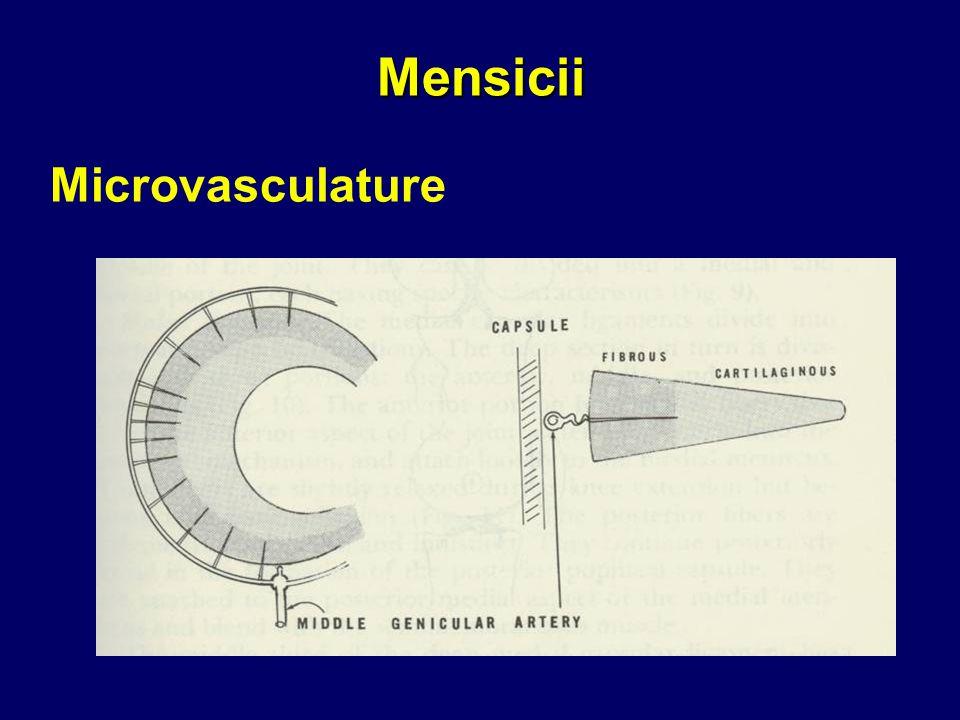 Mensicii Microvasculature