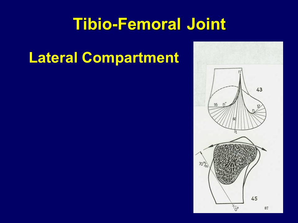 Tibio-Femoral Joint Lateral Compartment
