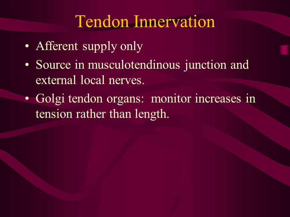 Tendon Innervation Afferent supply only Source in musculotendinous junction and external local nerves. Golgi tendon organs: monitor increases in tensi