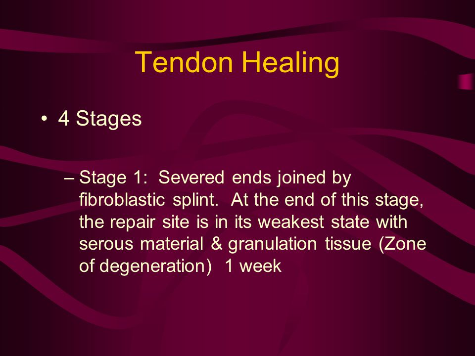 Tendon Healing 4 Stages –Stage 1: Severed ends joined by fibroblastic splint. At the end of this stage, the repair site is in its weakest state with s