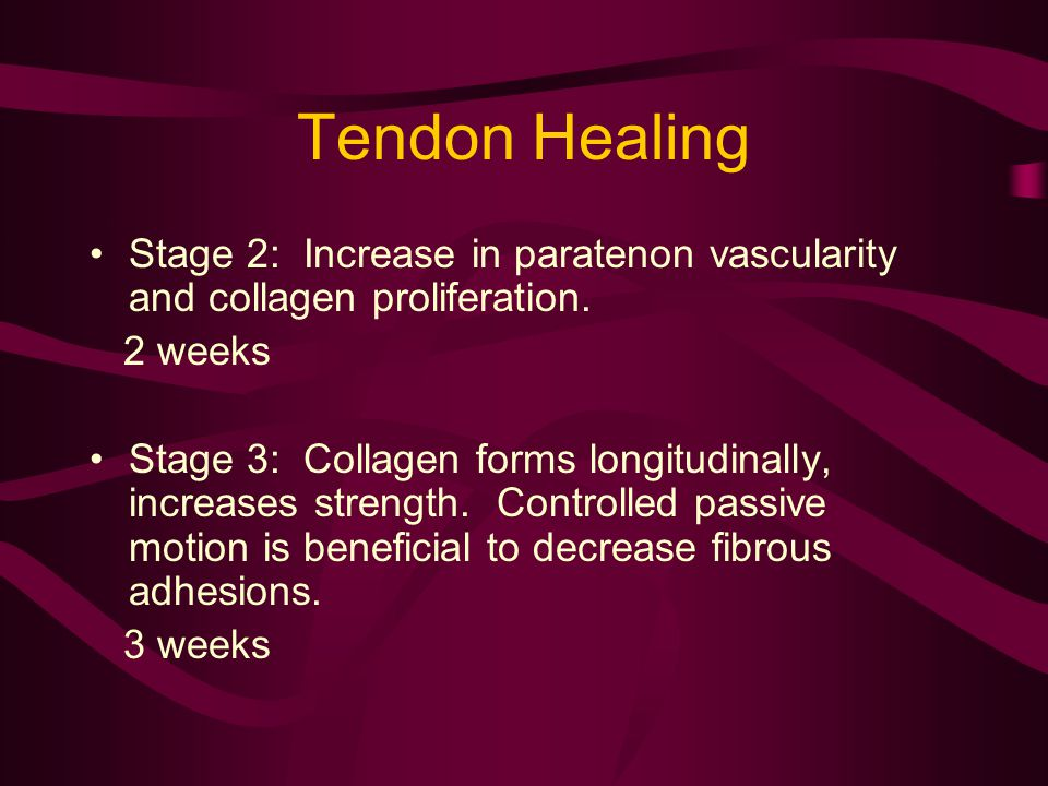 Tendon Healing Stage 2: Increase in paratenon vascularity and collagen proliferation. 2 weeks Stage 3: Collagen forms longitudinally, increases streng