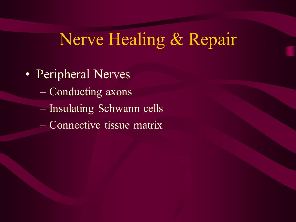 Nerve Healing & Repair Peripheral Nerves –Conducting axons –Insulating Schwann cells –Connective tissue matrix