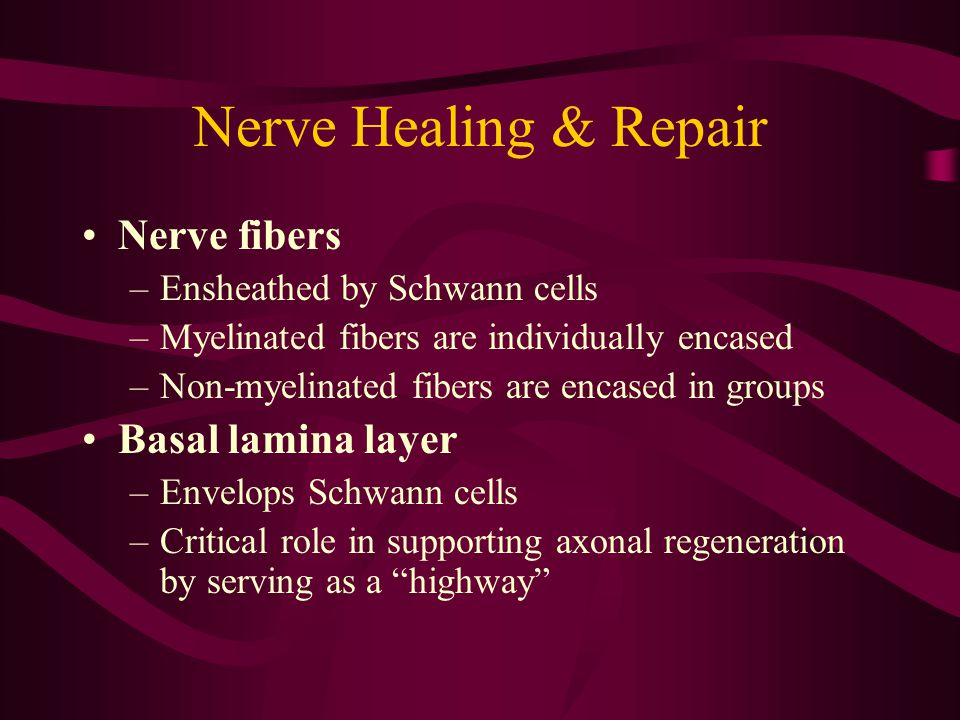 Nerve Healing & Repair Nerve fibers –Ensheathed by Schwann cells –Myelinated fibers are individually encased –Non-myelinated fibers are encased in gro