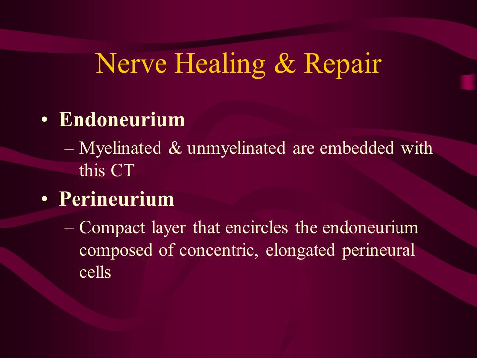 Nerve Healing & Repair Endoneurium –Myelinated & unmyelinated are embedded with this CT Perineurium –Compact layer that encircles the endoneurium comp