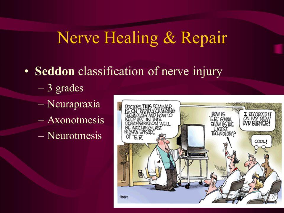 Nerve Healing & Repair Seddon classification of nerve injury –3 grades –Neurapraxia –Axonotmesis –Neurotmesis