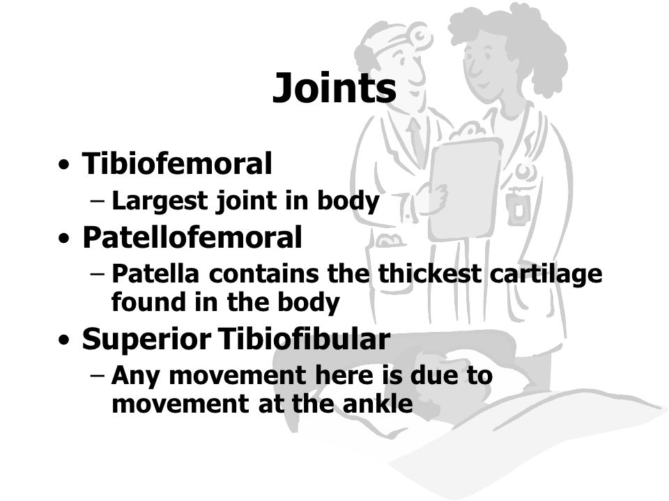 Joints Tibiofemoral –Largest joint in body Patellofemoral –Patella contains the thickest cartilage found in the body Superior Tibiofibular –Any moveme