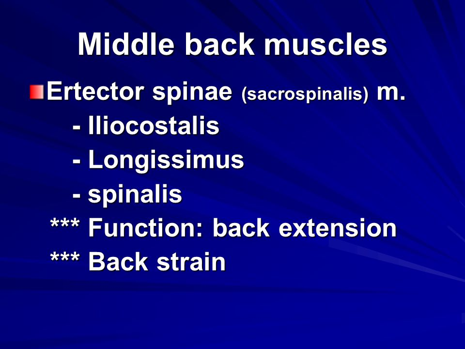 Middle back muscles Ertector spinae (sacrospinalis) m.