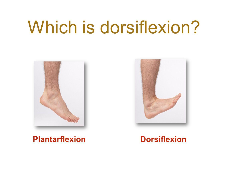 Which is dorsiflexion? DorsiflexionPlantarflexion