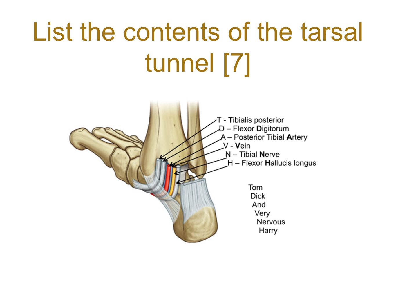 List the contents of the tarsal tunnel [7]