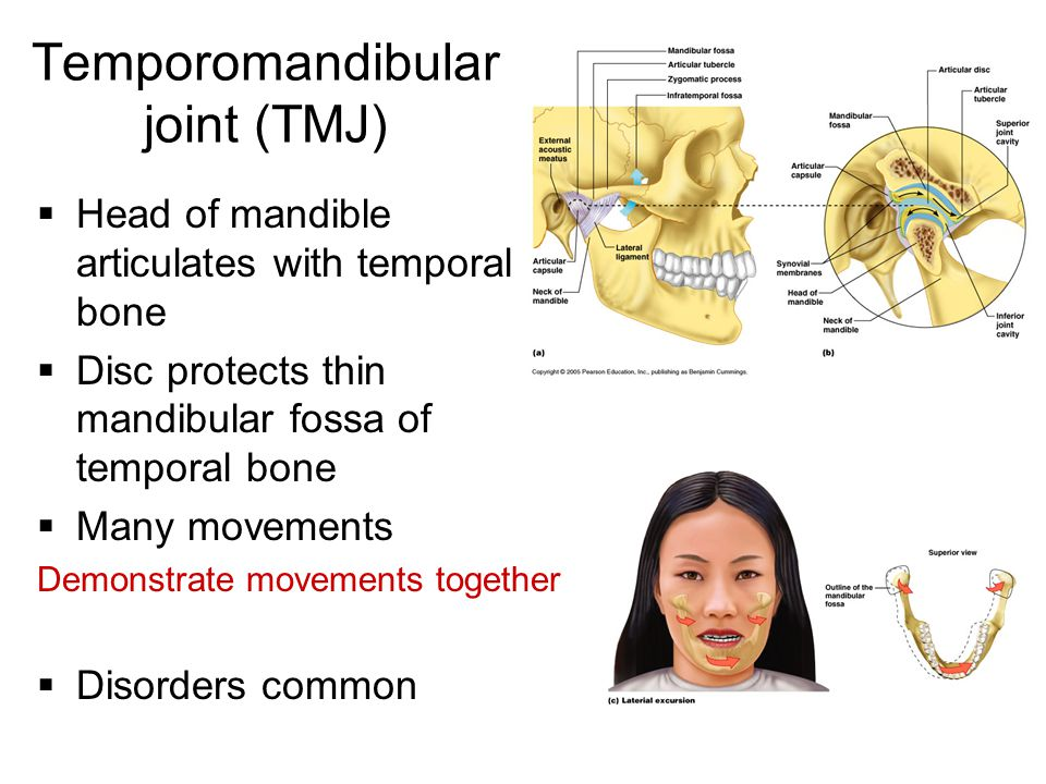 Temporomandibular joint (TMJ)  Head of mandible articulates with temporal bone  Disc protects thin mandibular fossa of temporal bone  Many movement
