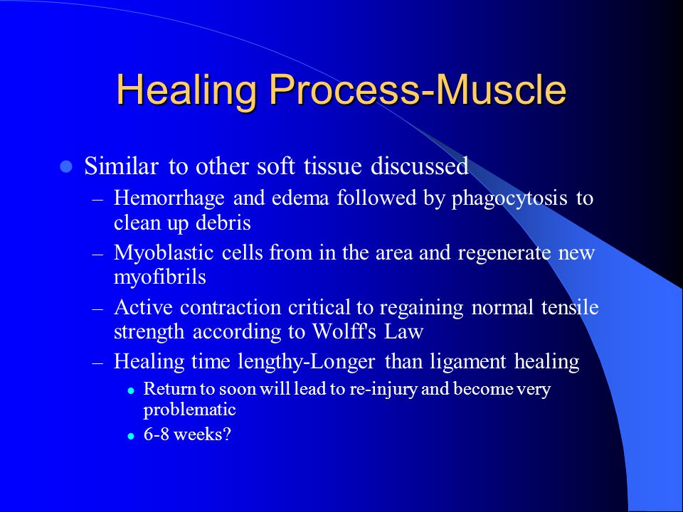 Healing Process-Muscle Similar to other soft tissue discussed – Hemorrhage and edema followed by phagocytosis to clean up debris – Myoblastic cells fr