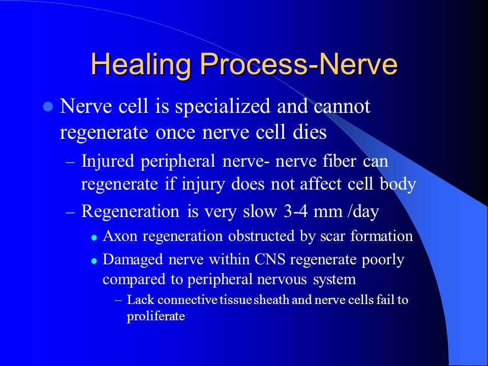 Healing Process-Nerve Nerve cell is specialized and cannot regenerate once nerve cell dies – Injured peripheral nerve- nerve fiber can regenerate if i