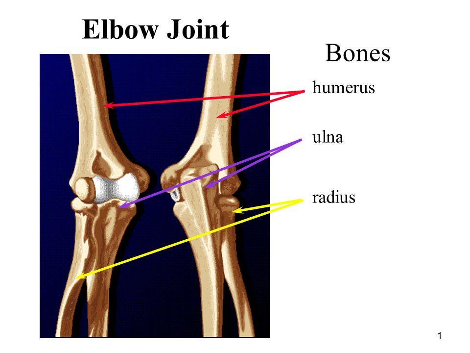 1 Elbow Joint humerus ulna radius Bones