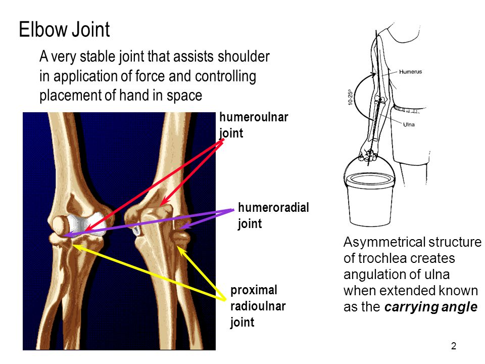2 Elbow Joint humeroulnar joint humeroradial joint proximal radioulnar joint A very stable joint that assists shoulder in application of force and con